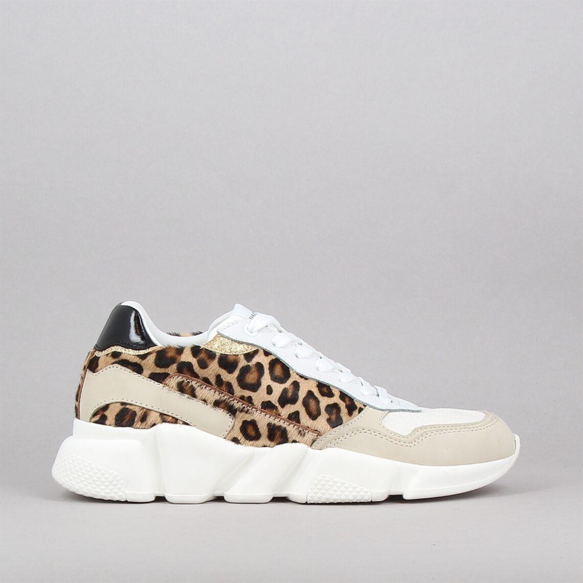 ore12-leopard-177897474-0.jpg
